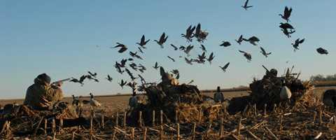 public duck hunting stuttgart arkansas